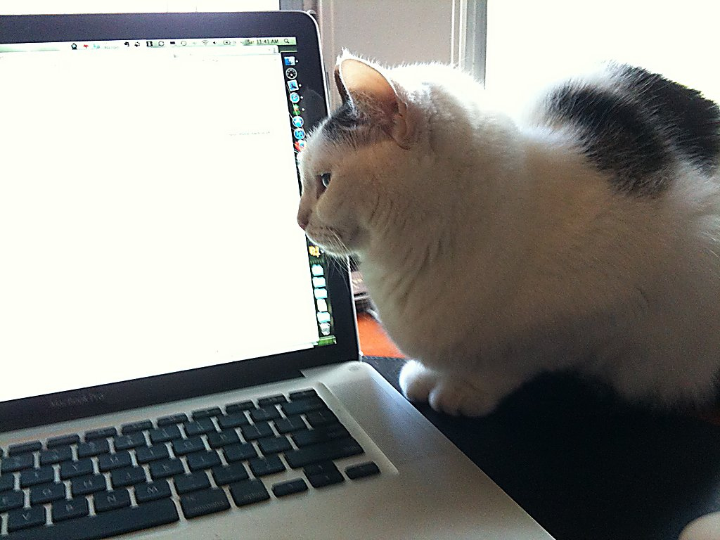 cat-pair-programming